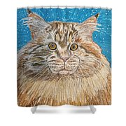 Maine Coon Cat Shower Curtain by Kathy Marrs Chandler