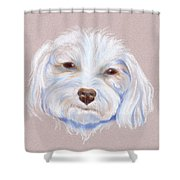 Maltipoo With An Attitude Shower Curtain by MM Anderson