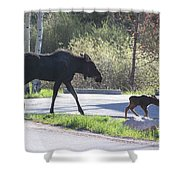 Mama And Baby Moose Shower Curtain by Fiona Kennard