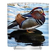 Mandarin Duck Shower Curtain by Robert Bales