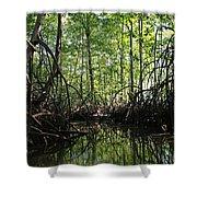 mangrove forest in Costa Rica 2 Shower Curtain by Rudi Prott