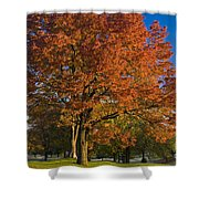 Maple Trees Shower Curtain by Brian Jannsen