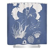 Martensia Elegans Hering Shower Curtain by Aged Pixel