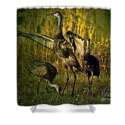 May I Have This Dance Shower Curtain by Lianne Schneider