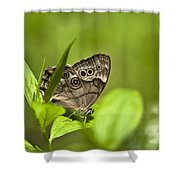 Meadow Butterfly Shower Curtain by Christina Rollo