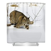 Meander Shower Curtain by Jack Milchanowski