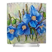Meconopsis    Himalayan Blue Poppy Shower Curtain by Karin  Dawn Kelshall- Best