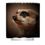 Meerkat 6 Shower Curtain by Ernie Echols