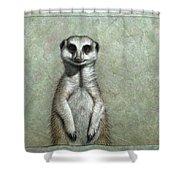 Meerkat Shower Curtain by James W Johnson