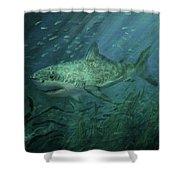 Megadolon Shark Shower Curtain by Tom Shropshire