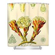 Melera Shower Curtain by Georgia Fowler