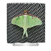 Mint Green Luna Moth Shower Curtain by Andee Design
