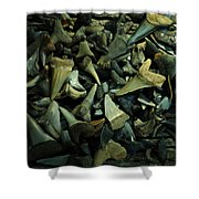 Miocene Fossil Shark Tooth Assortment Shower Curtain by Rebecca Sherman