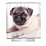 Miss You Shower Curtain by Edward Fielding