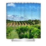 Mission Peninsula Vineyard Ll Shower Curtain by Michelle Calkins