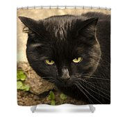 Molly Shower Curtain by Linsey Williams