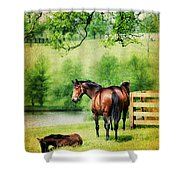 Mom And Foal Shower Curtain by Darren Fisher