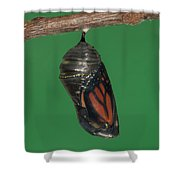 Monarch Butterfly Chrysalis Iv Shower Curtain by Clarence Holmes