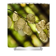 Money on Trees Shower Curtain by Christi Kraft