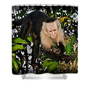 Monkey Business Shower Curtain by Gary Keesler