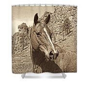 Montana Horse Portrait In Sepia Shower Curtain by Jennie Marie Schell