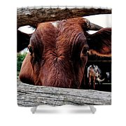 Mooo I See You Shower Curtain by Todd and candice Dailey