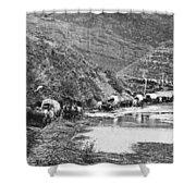 Mormon Emigrant Conestoga Caravan 1879 - To Utah Shower Curtain by Daniel Hagerman