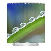 Morning Dew Drops Shower Curtain by Heiko Koehrer-Wagner