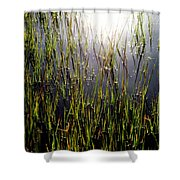 Morning Light Of God Shower Curtain by Karen Wiles