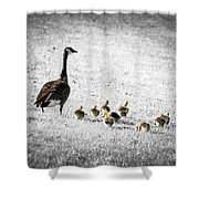 Mother goose Shower Curtain by Elena Elisseeva