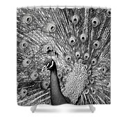 Mother Natures Fireworks Shower Curtain by Karen Wiles