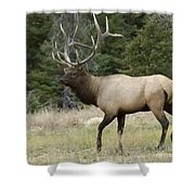 Mr Majestic Shower Curtain by Bob Christopher