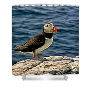 Mr. Puffin Shower Curtain by Michael Pickett