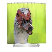 Muscovy Duck Shower Curtain by Rudy Umans