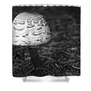 Mushroom Shower Curtain by Adam Romanowicz