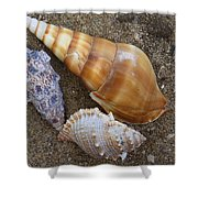 My Seashells Shower Curtain by  Photographic Art and Design by Dora Sofia Caputo