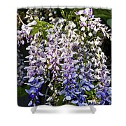 Nancys Wisteria 3 Db Shower Curtain by Rich Franco