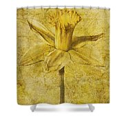 Narcissus Pseudonarcissus Shower Curtain by John Edwards