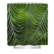 Nature's Best Green Abstract Art Shower Curtain by Christina Rollo
