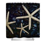 Nautical Sea Stars Shower Curtain by Paul Ward