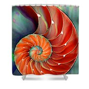 Nautilus Shell - Nature's Perfection Shower Curtain by Sharon Cummings