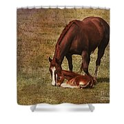 New Birth in Colorado Shower Curtain by Janice Rae Pariza