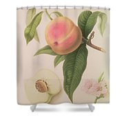 Noblesse Peach Shower Curtain by William Hooker