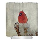 Northern Cardinal Shower Curtain by Sandy Keeton