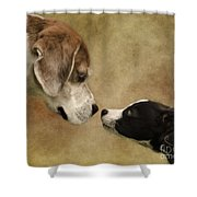 Nose To Nose Dogs Shower Curtain by Linsey Williams