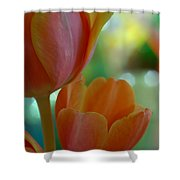 Nothing As Sweet As Your Tulips Shower Curtain by Donna Blackhall