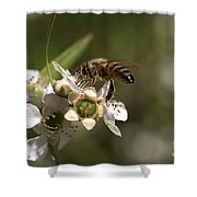 Nourishment Shower Curtain by Joy Watson