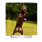 Nute And The Ball Shower Curtain by Jean Noren