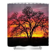 Oak Silhouette Shower Curtain by Cheryl Young