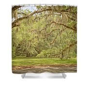 Oak Trees Draped With Spanish Moss Shower Curtain by Kim Hojnacki